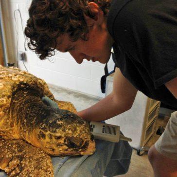 OBX Sea Turtles
