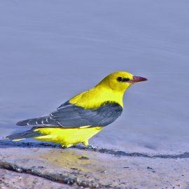 Wildlife of Cameroon: Birds