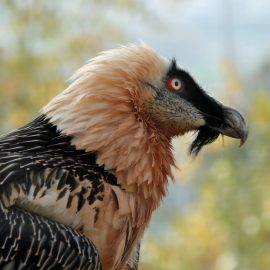 Photo Gallery: African Vultures