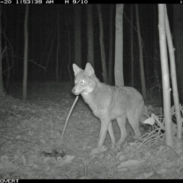 Camera Trapping Research