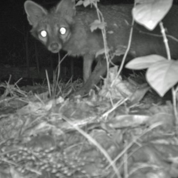Camera Trapping Update – December 2015