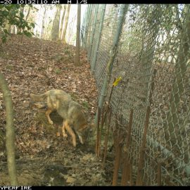 Camera Trapping Update – March 2016