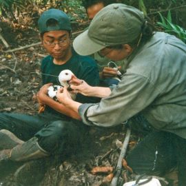 Preserving the White-Winged Duck