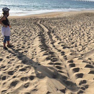 ftE NewsClip: First Sea Turtle Crawl of 2016